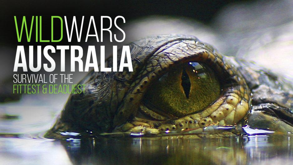 """""""Wild Wars Australia"""" verkauft nach Frankreich und Deutschland"""